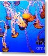 Jellyfish In Abundance Metal Print
