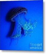 Surreal Australian Jellyfish In Blue Metal Print