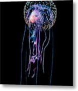 Jellyfish  Pelagia Noctiluca  With Fish Metal Print