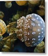 Jellyfish Swimming Right Metal Print
