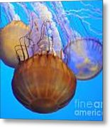 Jellyfish Trio Metal Print