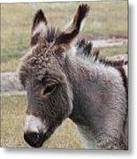 Jerusalem Donkey Metal Print