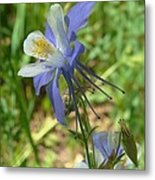 Jewel In The Glade 2 Metal Print