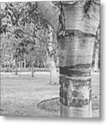 Jewel In The Woods In Black And White Metal Print