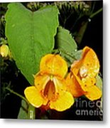 Jewel Weed Metal Print