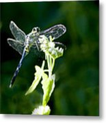 Jeweled Wings Metal Print