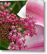 Asclepias And Friend Metal Print