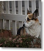 Johnny By The Fence Metal Print