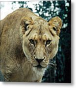 Join Me For Lunch? Metal Print