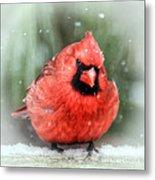 Jolly Old ....... Cardinal  Metal Print