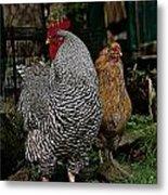 Jos Rooster Metal Print