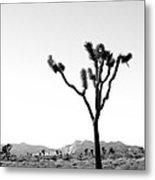 Joshua Tree No. 02 Metal Print