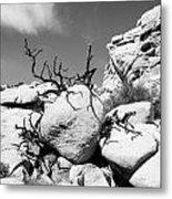 Joshua Tree 25 Metal Print