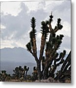Joshua Tree Forest Ivanpah Valley Metal Print