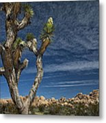 Joshua Tree In Joshua Tree National Park No. 279 Metal Print