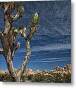 Joshua Tree In Joshua Tree National Park No. 279 Metal Print
