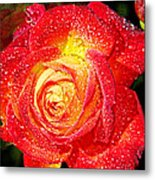Joyful Rose Metal Print