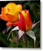 Judy Garland Rose Metal Print by Rona Black