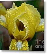 Juicy Lemon Petals Metal Print