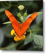 Julia Butterfly 1 Metal Print