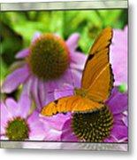 Julia Butterfly 2 Metal Print