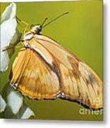 Julia Butterfly Metal Print