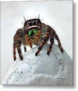 Jumper Spider 2 Metal Print