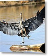 Jumping For Joy Metal Print