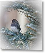 Junco In Pine Metal Print