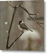 Junco In The Snow Metal Print