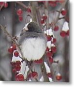 Junco Puffed Up On Crabapple Tree Metal Print