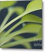 June Plantain Lily Close Ups Metal Print
