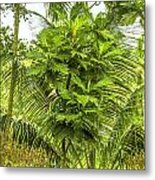 Jungle And Rice Field Metal Print