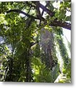Jungle Canopy Metal Print