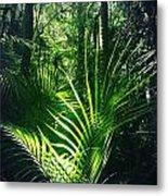 Jungle Fern Metal Print