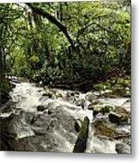 Jungle Flow Metal Print