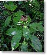 jungle in La Amistad National Park Panama 4 Metal Print