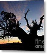 Juniper Tree, Canyonlands National Park Metal Print