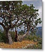 Juniper Tree On The Edge Of The Verde Valley Metal Print