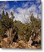 Juniper Trees At The Ghost Ranch Color Metal Print