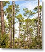 Ancient Looking Florida Forest At Aubudon Corkscrew Swamp Sanctuary Metal Print