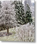 Ice Coating Trees And Lawn In A Back Yard Metal Print