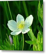 Just A Little White And Yellow Blossom Metal Print
