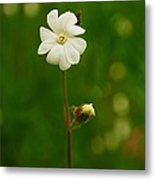 Just A Little White Flower Metal Print