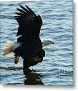 Just Checking The Water  Metal Print