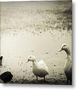 Just Duckie  Metal Print