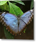 Just Hanging On Metal Print