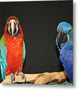 Just Hanging Out Metal Print
