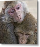 Just Hold Me Now Metal Print
