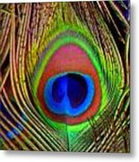 Just One Tail Feather Metal Print